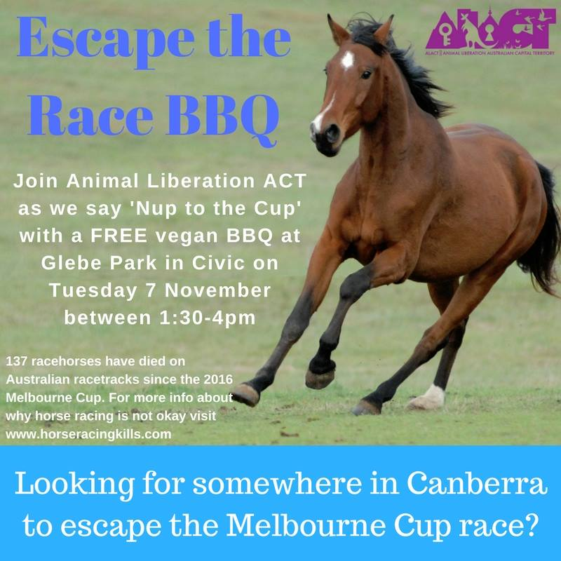 Escape the Race 2017